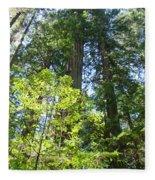 Redwoods Trees Forest Art Prints Baslee Troutman Fleece Blanket