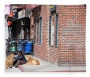 Resting On The Corner Fleece Blanket