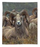 Resting Rams Fleece Blanket