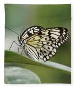 Rice Paper Butterfly - 2 Fleece Blanket by Paul Gulliver