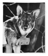 Rin-tin-tin (1916-1932) Fleece Blanket