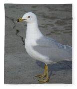 Ring-billed Gull Fleece Blanket