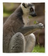 Ring-tailed Lemur Holding A Clump Of Grass Fleece Blanket