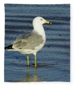 Ringed Billed Sea Gull Fleece Blanket