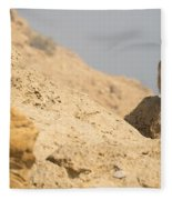 Rock Hyrax Procavia Capensis Fleece Blanket