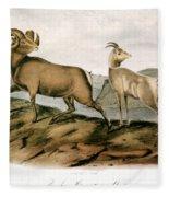 Rocky Mountain Sheep, 1846 Fleece Blanket