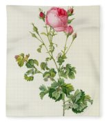 Rosa Centifolia Bipinnata Fleece Blanket