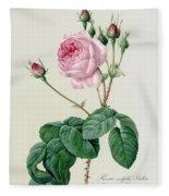 Rosa Centifolia Bullata Fleece Blanket