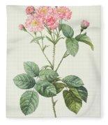 Rosa Centifolia Caryophyllea Fleece Blanket