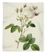 Rosa Centifolia Mutabilis Fleece Blanket
