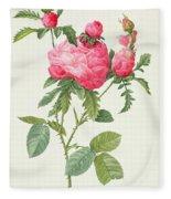 Rosa Centifolia Prolifera Foliacea Fleece Blanket
