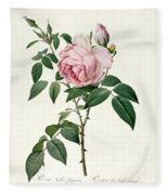 Rosa Chinensis And Rosa Gigantea Fleece Blanket