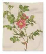 Rosa Cinnamomea The Cinnamon Rose Fleece Blanket