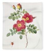 Rosa Eglantera Punicea Fleece Blanket