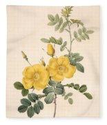Rosa Eglanteria Fleece Blanket