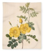 Rosa Eglanteria Fleece Blanket