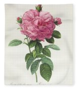 Rosa Gallica Flore Giganteo Fleece Blanket