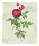 Rosa Gallica Gueriniana Fleece Blanket
