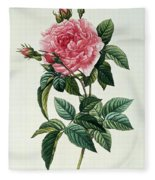 Rosa Gallica Regalis Fleece Blanket