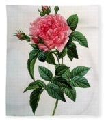 Rosa Gallica Regallis Fleece Blanket