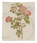 Rosa Involuta Var Wilsoni Fleece Blanket