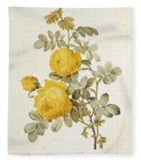 Rosa Sulfurea Fleece Blanket