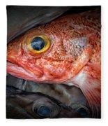 Rose Fish Fleece Blanket