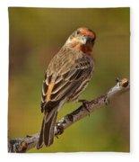 Rosy Finch Posing I Fleece Blanket