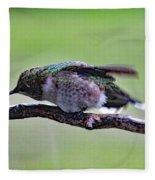 Rubbing Its Bill - Ruby-throated Hummingbird Fleece Blanket