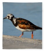Ruddy Turnstone Fleece Blanket