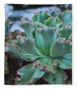 Echeveria Rosea  Fleece Blanket