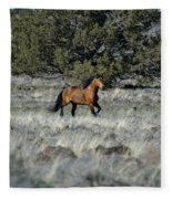 Running Bachelor Stallion Fleece Blanket