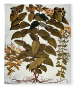 Saint-johns-wort, 1613 Fleece Blanket