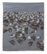 Sanderlings On The Shore Fleece Blanket