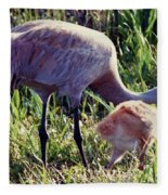 Sandhill Crane And Chick Fleece Blanket
