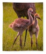 Sandhill Cranes Playing Fleece Blanket