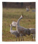 Sandhill Delight Fleece Blanket