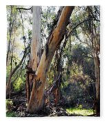 Santa Barbara Eucalyptus Forest Fleece Blanket