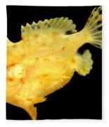 Sargassum Anglerfish Fleece Blanket
