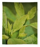 Sassafras Tree Fleece Blanket