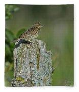 Savannah Sparrow.. Fleece Blanket