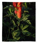 Scarlet Globemallow Fleece Blanket