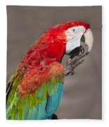 Scarlet Macaw - 2 Fleece Blanket