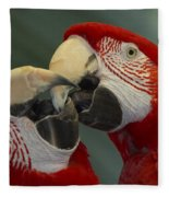 Scarlet Macaw Ara Macao Pair Kissing Fleece Blanket