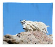 Scruffy Mountain Goat On The Mount Massive Summit Fleece Blanket