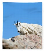 Scruffy Mountain Goat On The Mount Massive Summit Fleece Blanket