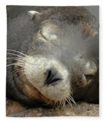 Sea Lion In San Francisco Fleece Blanket