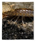 Isopod Fleece Blanket