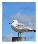Seagull Beach Art - Sitting Pretty - Sharon Cummings Fleece Blanket