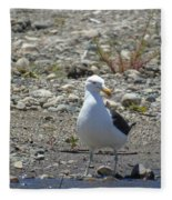 Seagull In Patagonia Fleece Blanket